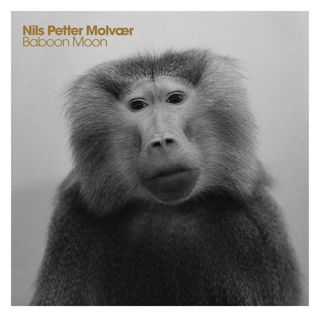 cover-molvaer-baboon
